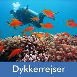 Dykkerrejser